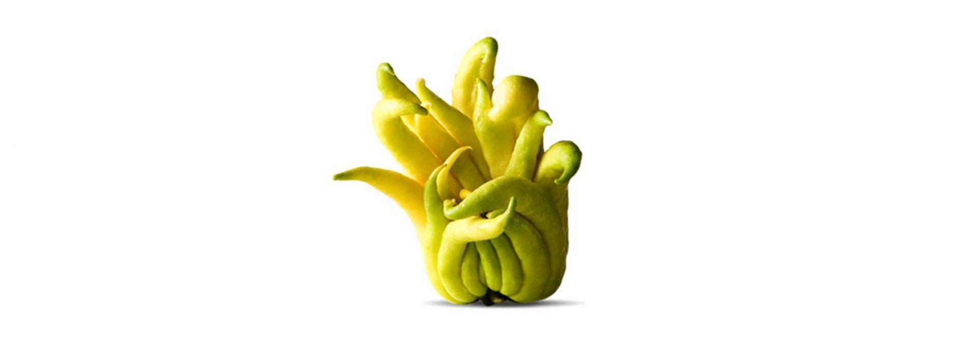 Buddha Fruit