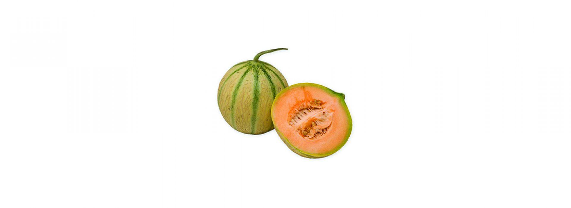 Charentais cantaloupe