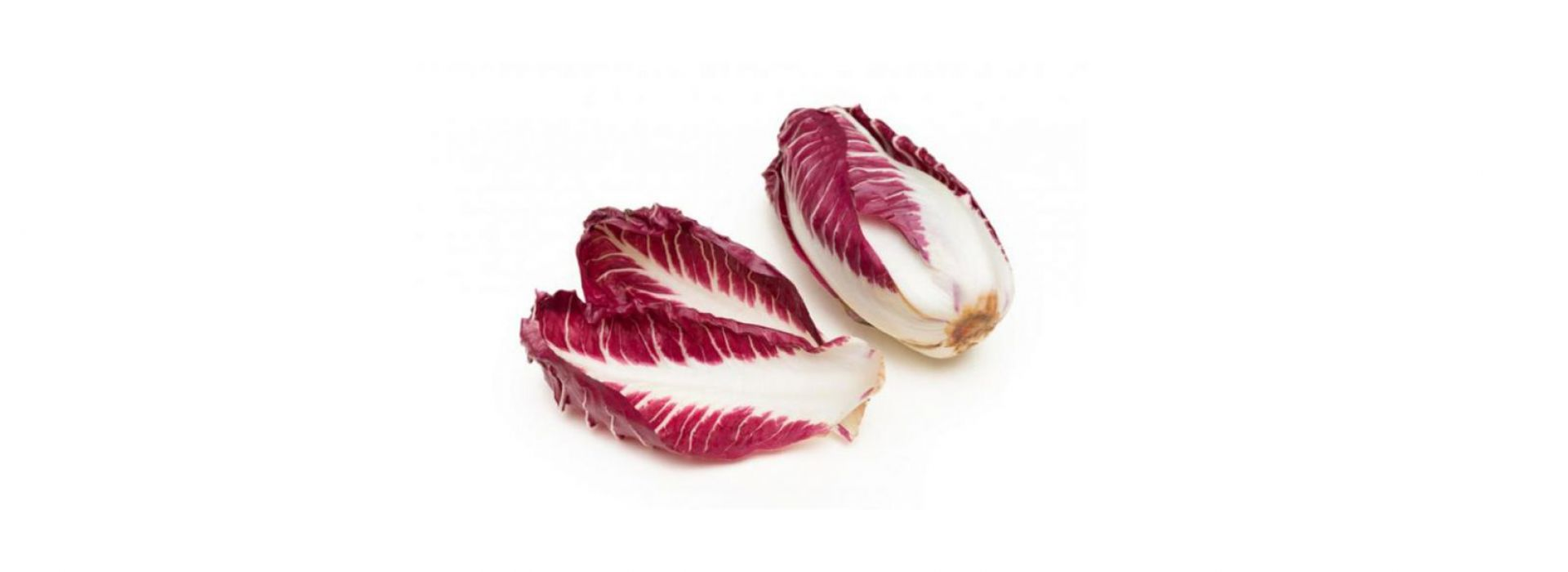 Chicory Red