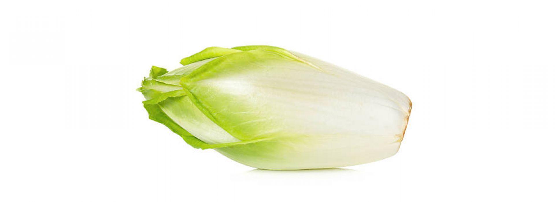Chicory White