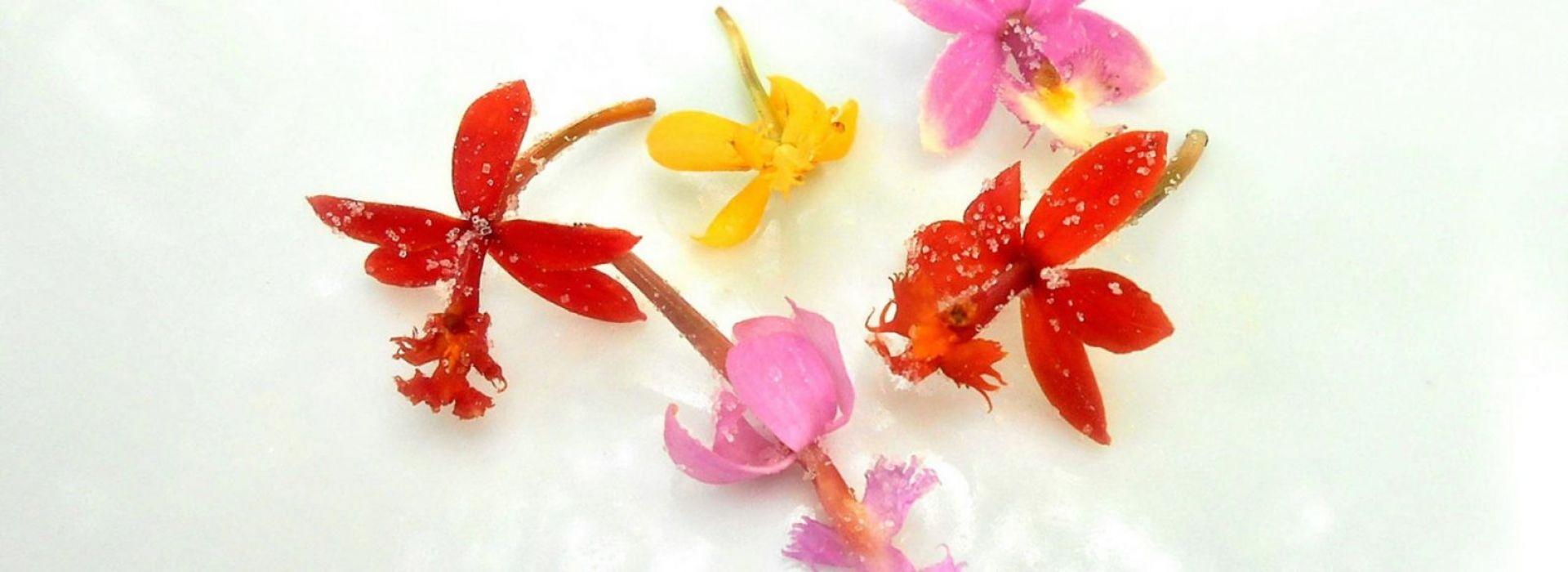 Edible Karma Orchid