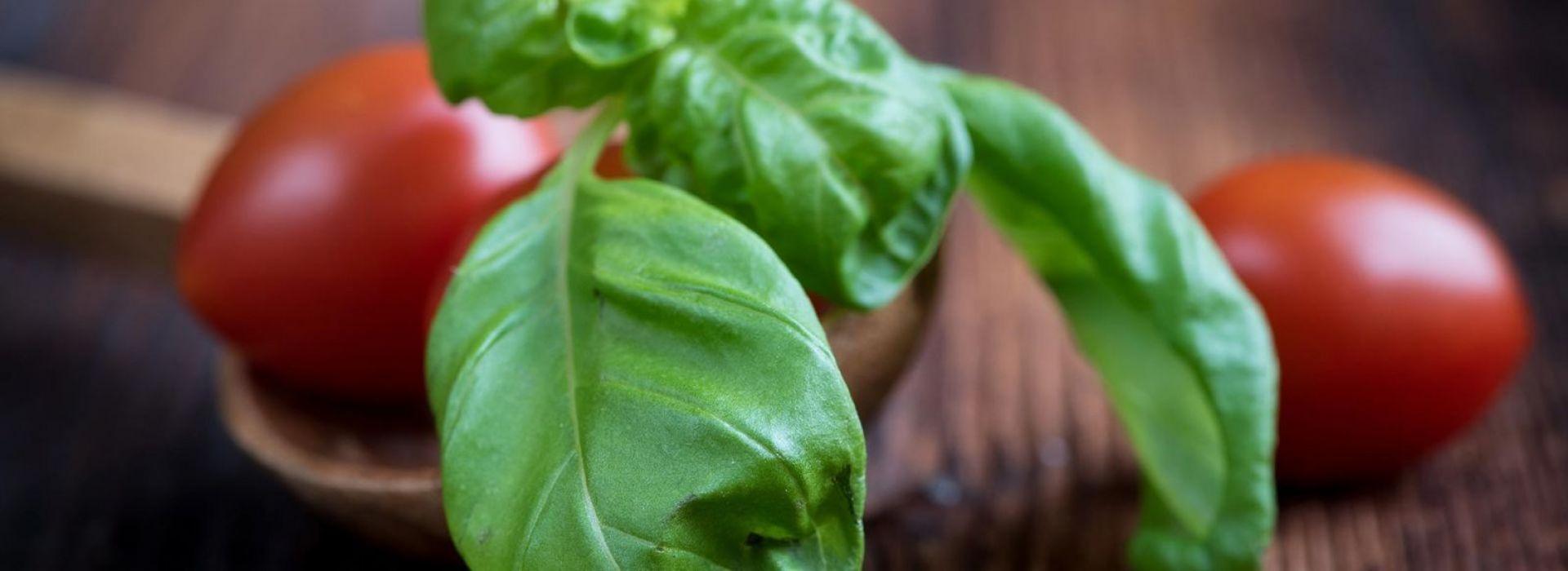 Herb Basil Green & Red
