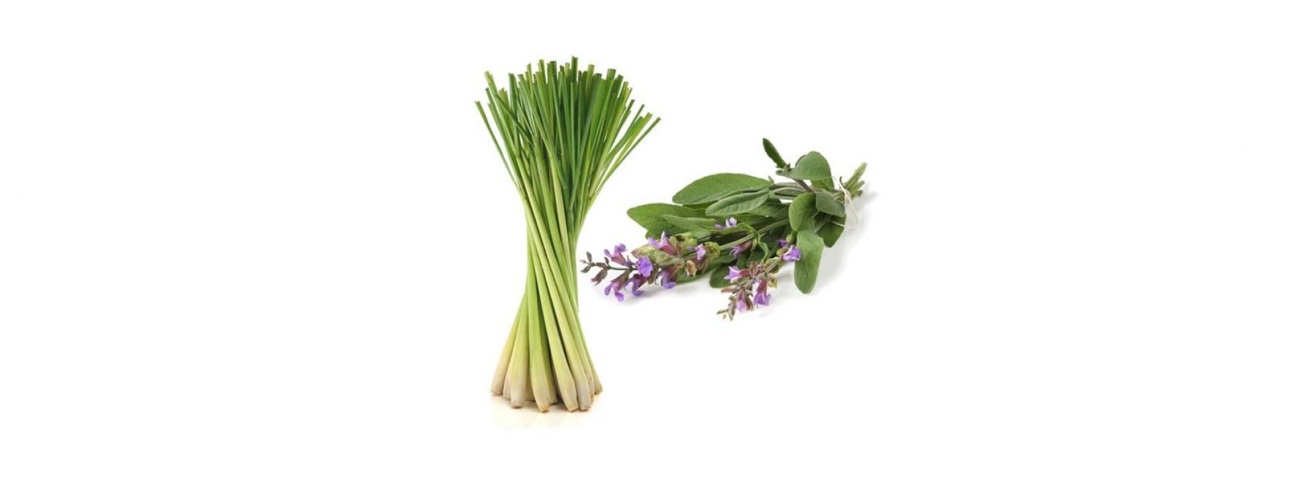 Herb Lemon Grass
