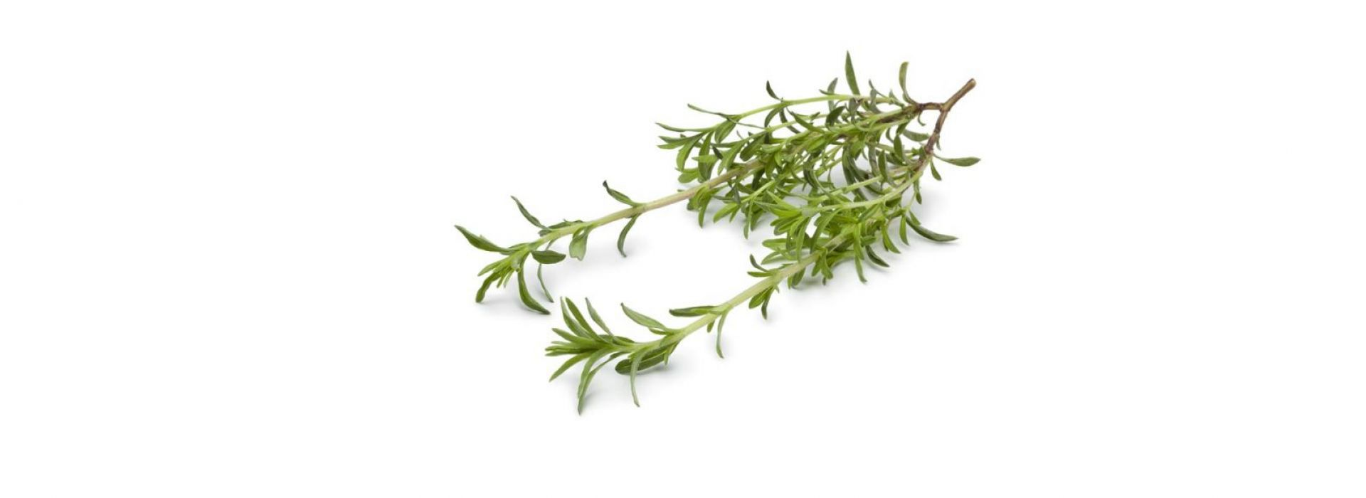 Herb Savory