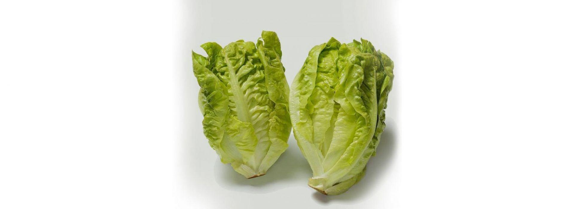 Lettuce Little Gem Romaine