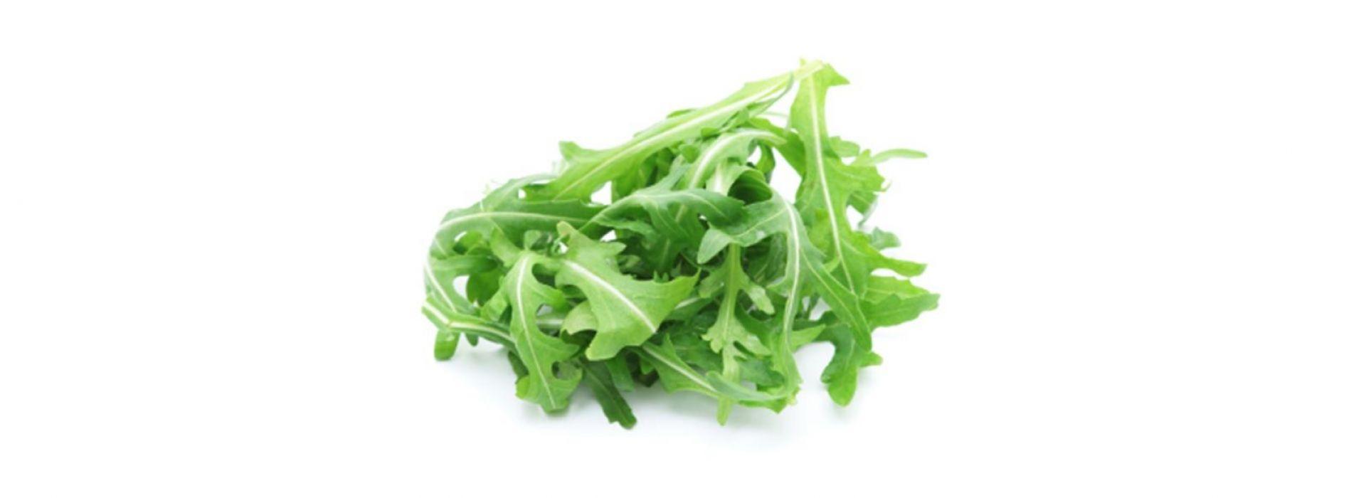 Lettuce Rocula