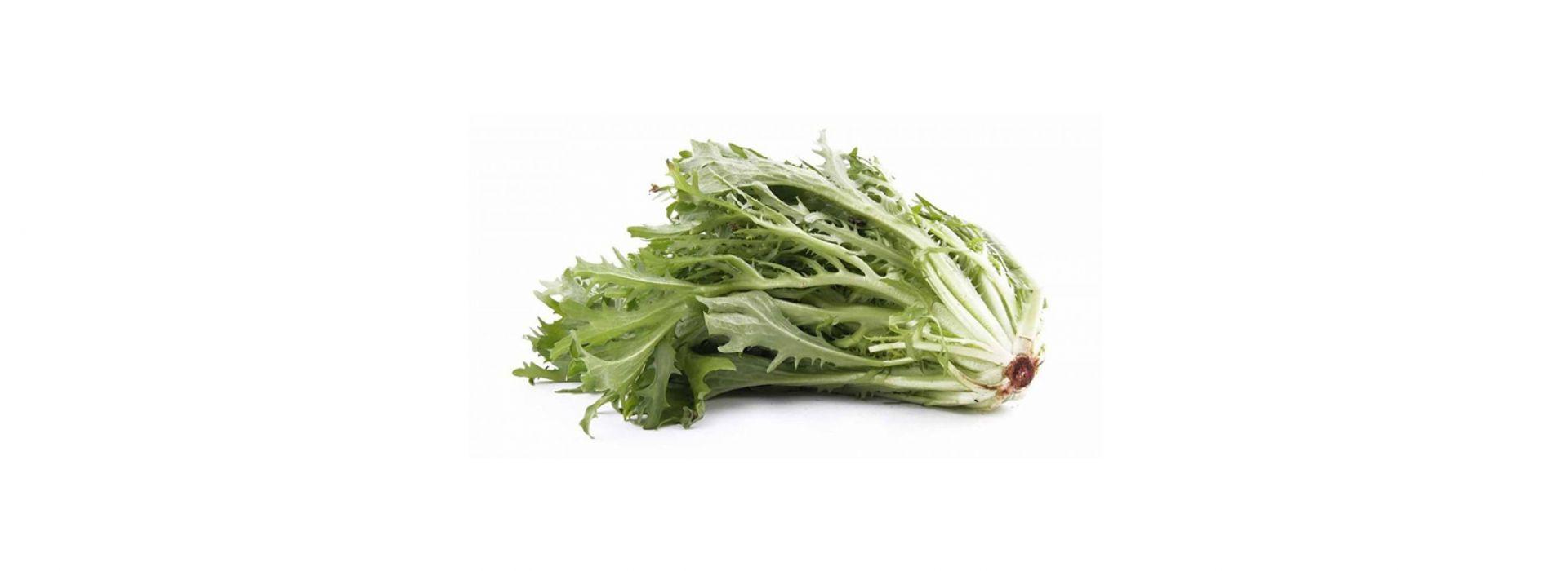 Lettuce Frisee