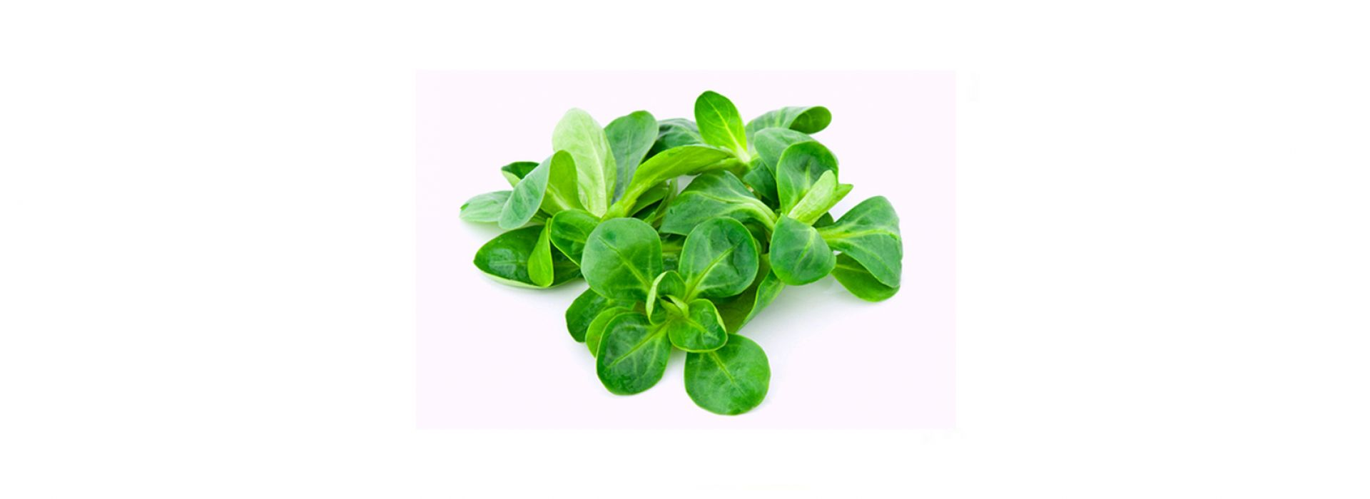 Lettuce Mache Salad