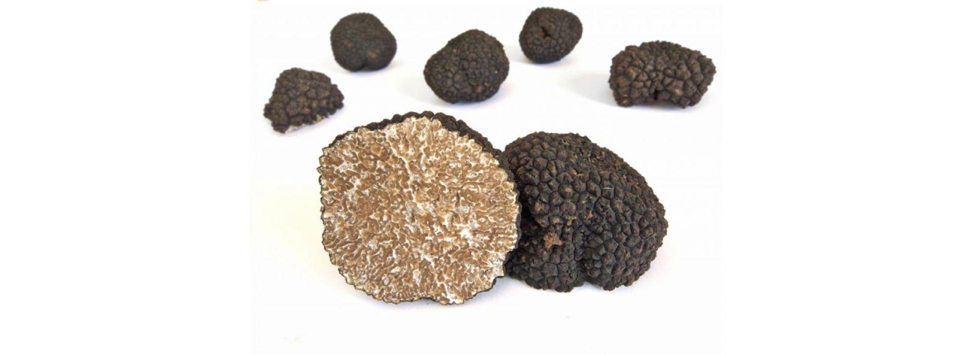 Mushroom Truffle