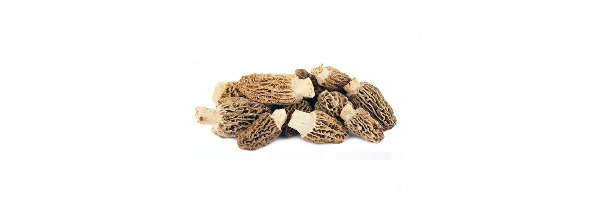 Mushroom Morel