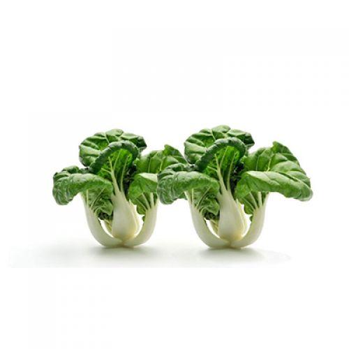 Baby Paksoy Lettuce