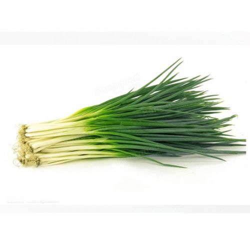 Herb Chinese Garlic
