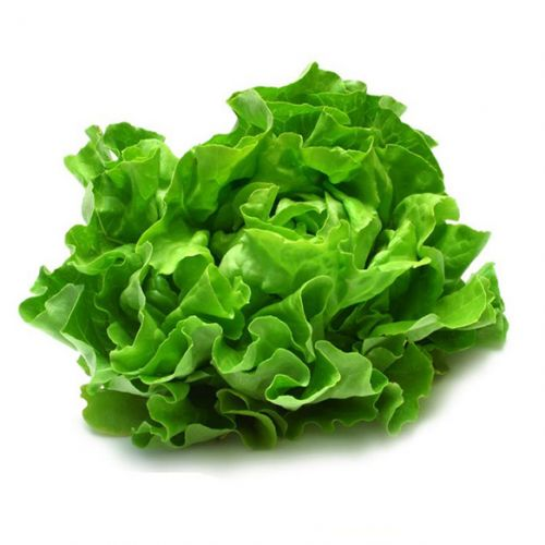 Lettuce Boston