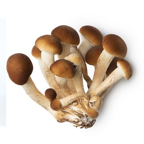 Mushroom Pioppino