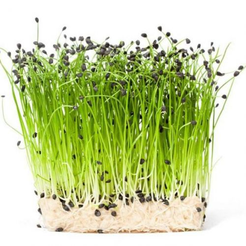 Rock Chives Cress
